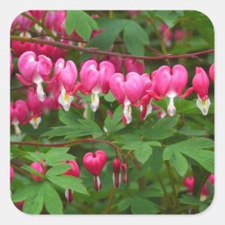 Bleeding Hearts Nature, Photo Square Sticker
