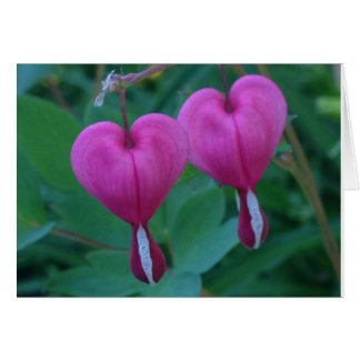 Bleeding Hearts Plant Card