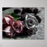 Blended roses, black, white & colour poster