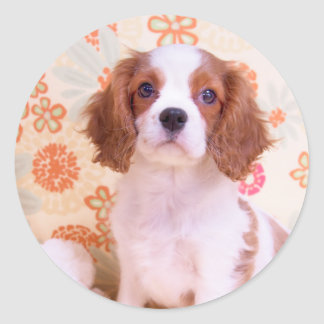 Blenheim Cavalier King Charles Spaniel Sticker