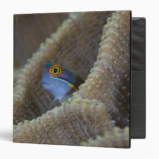 Blenny fish Blenniidae) poking it's head out Vinyl Binder