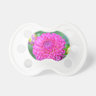 Blessed And Highly Favored Pacifier