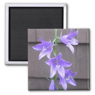 Bleu de fleur d usine de jardin de Campanula Aimants Pour Réfrigérateur