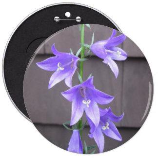 Bleu de fleur d usine de jardin de Campanula Badge