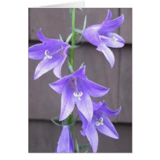 Bleu de fleur d usine de jardin de Campanula Carte
