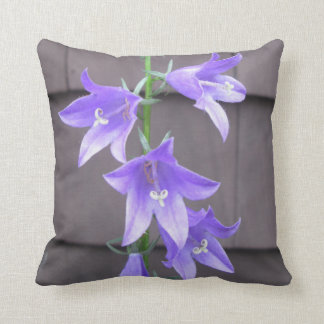 Bleu de fleur d usine de jardin de Campanula Coussin