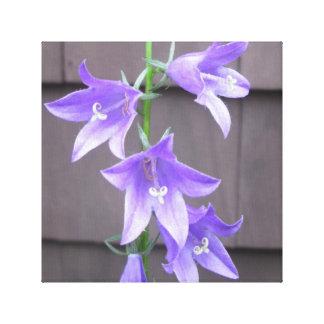 Bleu de fleur d'usine de jardin de Campanula Impressions Sur Toile