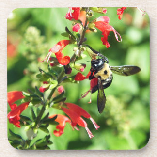 Blissful Bee Coasters