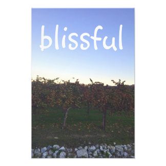 Blissful Motivational Quote Winery Photograph