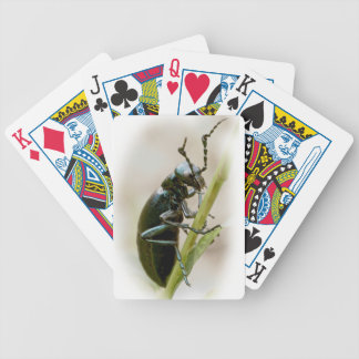 Blister Beetle - Meloidae Poker Deck
