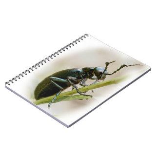 Blister Beetle - Meloidae Spiral Notebook