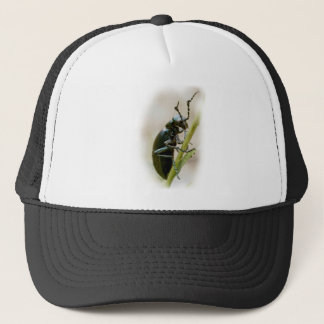 Blister Beetle - Meloidae Trucker Hat