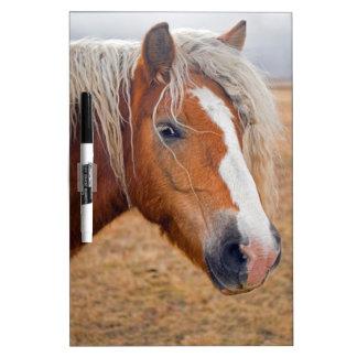 Blond Horse Dry-Erase Whiteboards