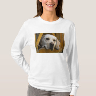 Blond Labrador retriever, Patagonia, Chile T-Shirt