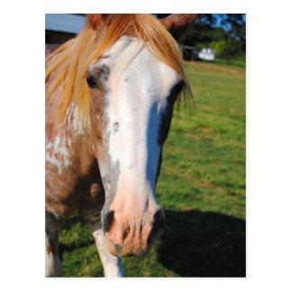 Blonde Horse Photo Post Card