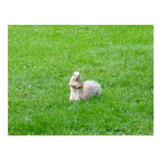 Blonde Squirrel Postcard