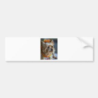 Blonde Yorkshire Terrier Bumper Sticker