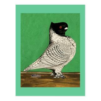 Blondinette Frill Pigeon Postcard