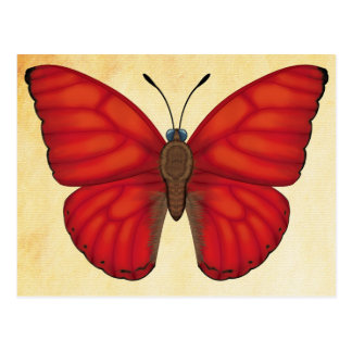 Blood Red Glider Butterfly Postcard