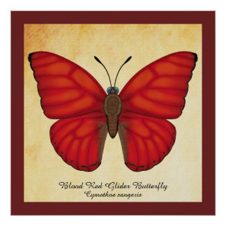 Blood Red Glider Butterfly Poster