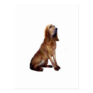 Bloodhound (B) - Sitting Postcard