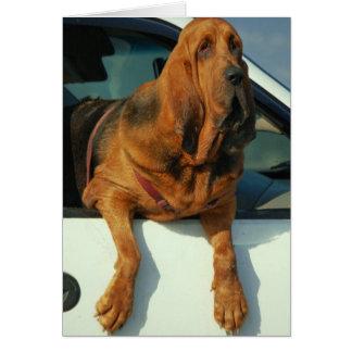 Bloodhound Card