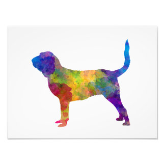 Bloodhound in watercolor photo