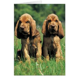 Bloodhound Puppies Card