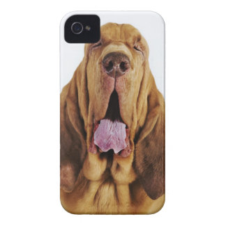 Bloodhound (St. Hubert Hound) with closed eyes, iPhone 4 Cases