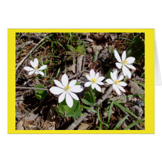 Bloodroot II Blank Note Card