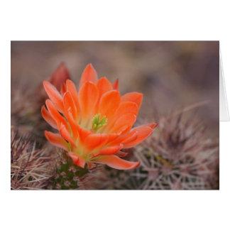 bloom in orange card