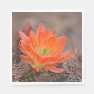 Bloom in orange paper napkins