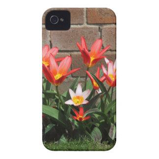 bloom iPhone 4 case