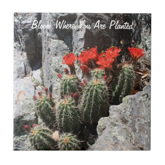 Bloom Where You Are Planted Tile