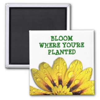 Bloom where you're Planted Magnet
