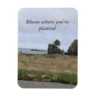 Bloom where you're planted rectangular photo magnet
