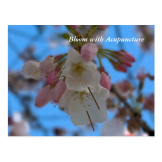 Bloom With Acupuncture II postcard