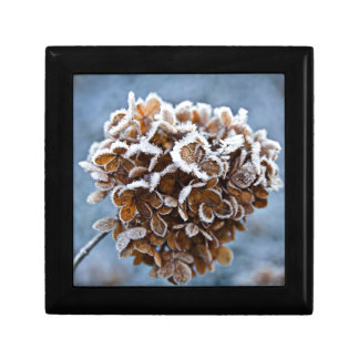 Bloom with ice crystals gift box