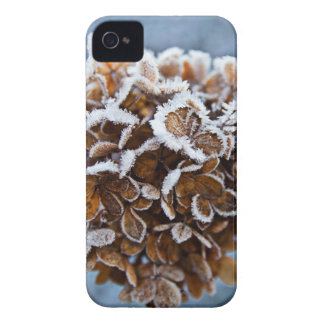 Bloom with ice crystals iPhone 4 covers