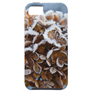 Bloom with ice crystals iPhone 5 cover