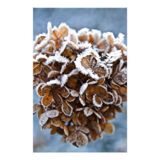 Bloom with ice crystals stationery