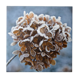 Bloom with ice crystals tile