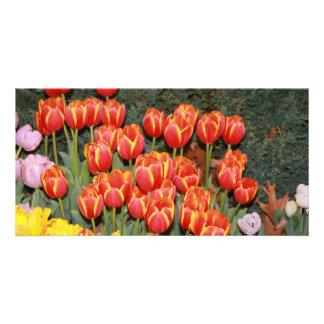 Bloomin' Tulips! Custom Photo Card