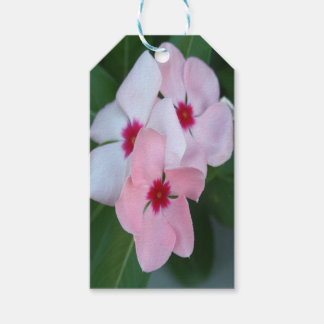 Blooming Beautiful Pink Impatiens Flowers Pack Of Gift Tags