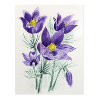 Blooming blue violet pasque flower in watercolor postcard