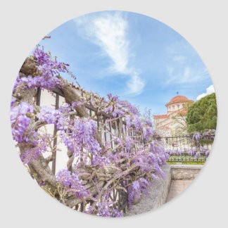 Blooming blue Wisteria sinensis on fence in Greece Classic Round Sticker