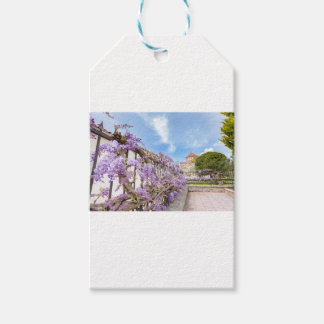 Blooming blue Wisteria sinensis on fence in Greece Gift Tags