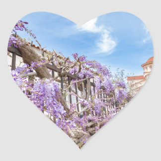 Blooming blue Wisteria sinensis on fence in Greece Heart Sticker