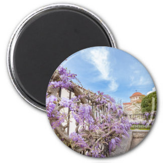 Blooming blue Wisteria sinensis on fence in Greece Magnet