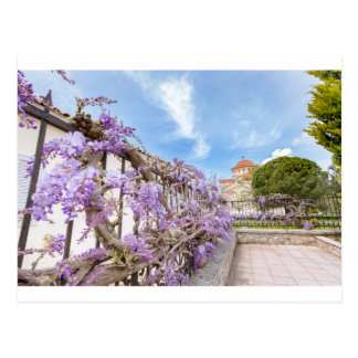 Blooming blue Wisteria sinensis on fence in Greece Postcard